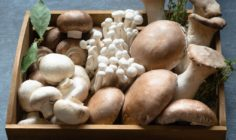 11 Benefits of Functional Mushrooms