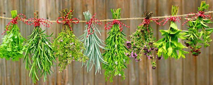 Unusual Herbs